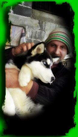 Wolf, 50, Serbia